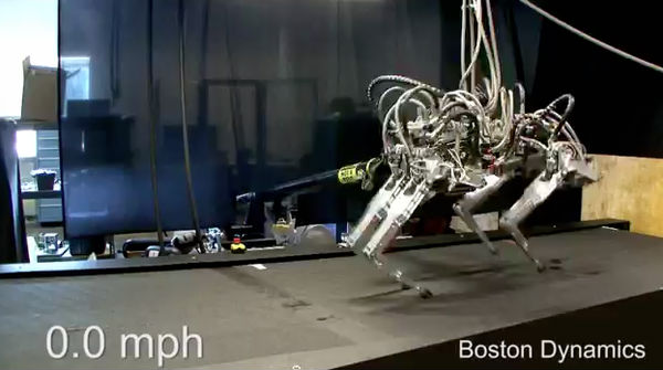 robot mèo