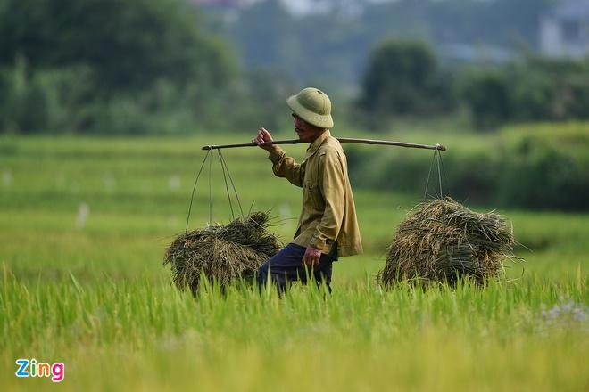 Vi sao gia gao Viet Nam vuot Thai Lan? anh 2