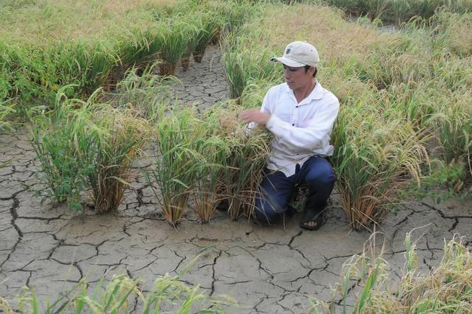 Thủ tướng hỏa tốc chỉ đạo theo dõi dòng chảy sông Mekong và xâm nhập mặn ở ĐBSCL - ảnh 1