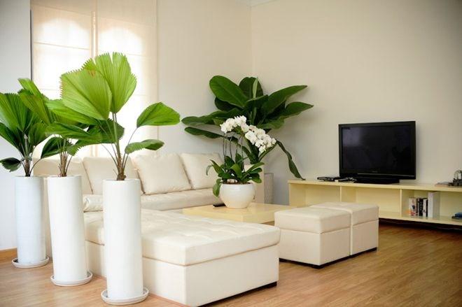 Không gian phòng khách ngập tràn màu trắng và cây xanh.