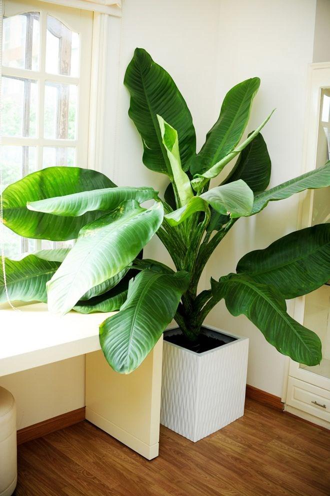 Nam ca sĩ rất thích cây xanh, anh luôn dành thời gian chăm sóc cây cối trong nhà. Có những cây sở hữu chiều cao đến hơn 2m.