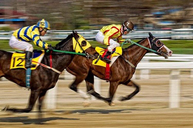 đua ngựa
