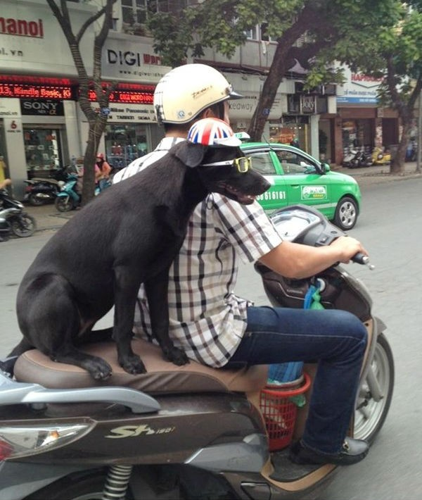 Rộ mốt chở thú cưng dạo phố