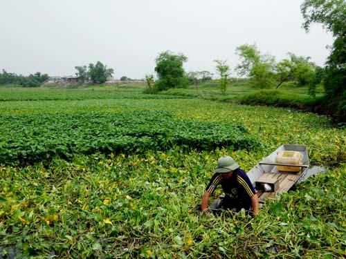 Cận cảnh quy trình trồng rau muống tưới xác động vật thối - Ảnh 3