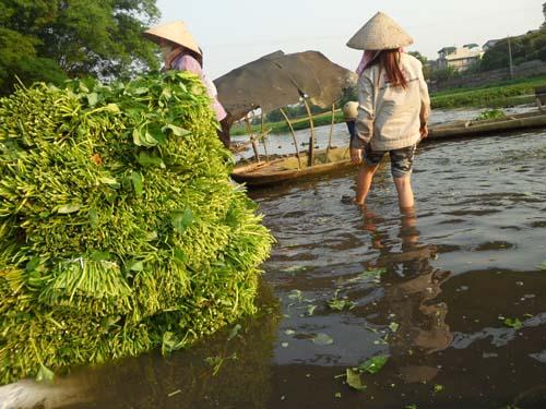 Cận cảnh quy trình trồng rau muống tưới xác động vật thối - Ảnh 8