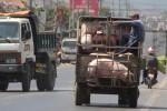 Thương lái Trung Quốc thu gom, giá heo Đồng Nai tăng trở lại