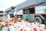 Sa Đéc tung ra thị trường 2 triệu giỏ hoa Tết