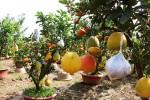Lão nông thu lãi nửa tỷ đồng mỗi năm nhờ cây ghép 10 loại quả