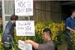 """Địa lan Trung Quốc bán """"phá giá"""" chỉ 100.000 đồng/cành"""