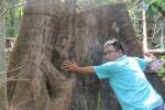 Người dân báo tin lâm tặc phá rừng phòng hộ ở Bắc Trà My