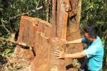 Kiểm tra phá rừng phòng hộ Bắc Trà My