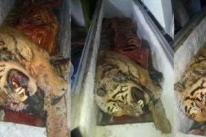 Phát hiện 5 con hổ bị giết, đem đi ướp đông