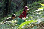 Liên hoàn bẫy bảo vệ vườn sâm trên đỉnh núi