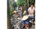 Vụ cá lóc chết bất thường: Người dân mua ủng hộ gần 2 tấn cá chết