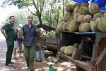 Trái cây Nam Bộ mất mùa, xuống giá