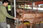 """Nông nghiệp 5 tháng: Lợn sắp """"thoát hiểm"""", giữ tăng trưởng 3%"""
