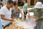 Trứng hạ giá chỉ còn 800 đồng/quả: Cay đắng chịu lỗ 300-500 đồng