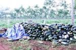 """Gia Lai chỉ đạo xử lý nghiêm vụ thương lái """"bỏ bom"""" nông dân"""