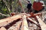 Đóng cửa rừng, gỗ vẫn về xuôi