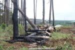 Kiểm tra vụ mua bán đất rừng liên quan đến người nhà nguyên phó Giám đốc Công an tỉnh