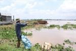 Buốt lòng thấy sông 'nuốt' hàng nghìn m2 đất trồng hoa