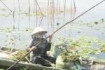 Nhộn nhịp mùa cá linh ở miền Tây
