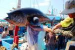 Ngư dân Việt bình thản trước 18.000 tàu cá TQ tràn xuống Biển Đông