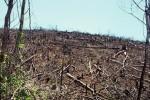 Bình Định: Thêm một vụ phá 20ha rừng