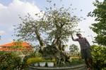 Cây bằng lăng ghép trăm tuổi giá hơn một tỷ đồng ở Sài Gòn