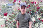 Chàng trai đau đáu tìm kiếm cây hoa hồng cổ 20 năm tuổi bị trộm