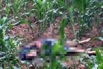 Bắt nghi phạm vụ phát hiện thi thể nam thanh niên trong bãi ngô