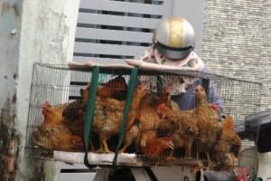 Rộ rao bán gà sống tận nhà