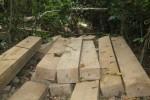 Chủ tịch tỉnh Bình Định giao công an điều tra vụ đốn hạ 23 cây gỗ dổi