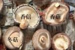 Nấm hương Nhật giá gấp 20 lần đổ về Việt Nam