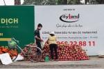 Thanh long Bình Thuận đổ về Sài Gòn giá 15.000 đồng 2kg