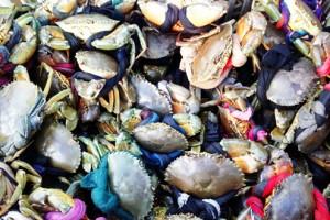 Giá cua biển tăng mạnh dịp cuối năm