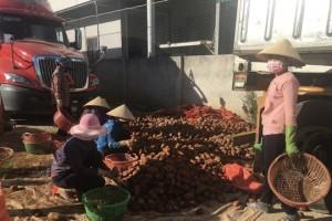 Người tiêu dùng TP.HCM chê rau trái Trung Quốc