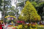 Những cây độc lạ ở hội hoa xuân lớn nhất Sài Gòn