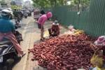 Khoai lang Nhật 10.000 đồng/kg tràn khắp các tuyến phố TP.HCM