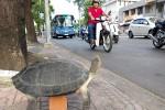 4 triệu đồng một con rùa răng bán vỉa hè Sài Gòn
