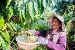 EVFTA mở ra cơ hội cực lớn cho nông sản Việt Nam