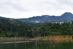 Quảng Nam bảo vệ nghiêm ngặt rừng sâm ba kích tím mới phát hiện