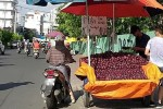 """Mận tím """"khổng lồ"""" Trung Quốc bán đầy đường Sài Gòn"""