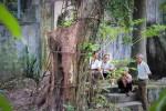 Vụ đấu giá gỗ sưa ở Hà Nội đổ bể vì khách chê quá đắt