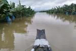 1.500ha trái cây của bầu Đức tại Lào bị ngập lụt