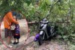 Bé gái sợ hãi, khóc không thành tiếng khi bị cây đổ trúng trên đường tới lớp