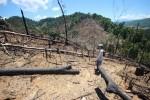 Cần mạnh tay hơn với tội phạm phá hoại môi trường