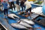 EC đánh giá cao nỗ lực của Việt Nam trong chống khai thác hải sản trái phép