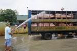 Lợn nhập lậu tràn qua biên giới, QLTT ra công văn khẩn