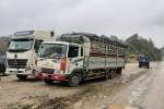 Giá lợn Trung Quốc tăng cao, dân buôn gom hàng xuất lậu qua biên giới